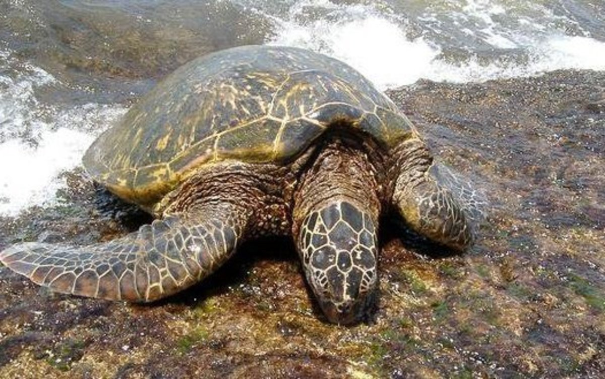 Turtles really do come ashore at Turtle Bay.