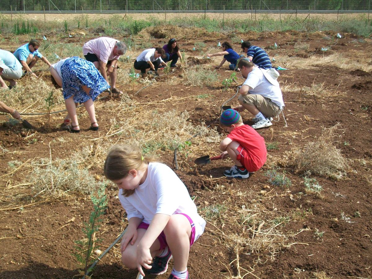 Planting cypress and carob trees in a JNF forest