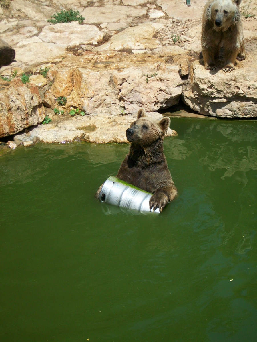 Party bear at the Jerusalem Zoo