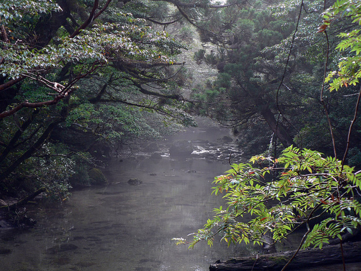 Stream and forest, Yakushima.