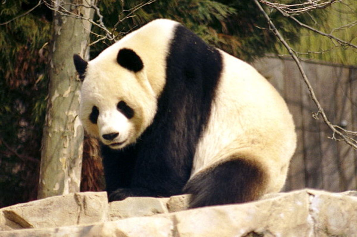 Visitors can see pandas at the Giant Panda Pavilion.