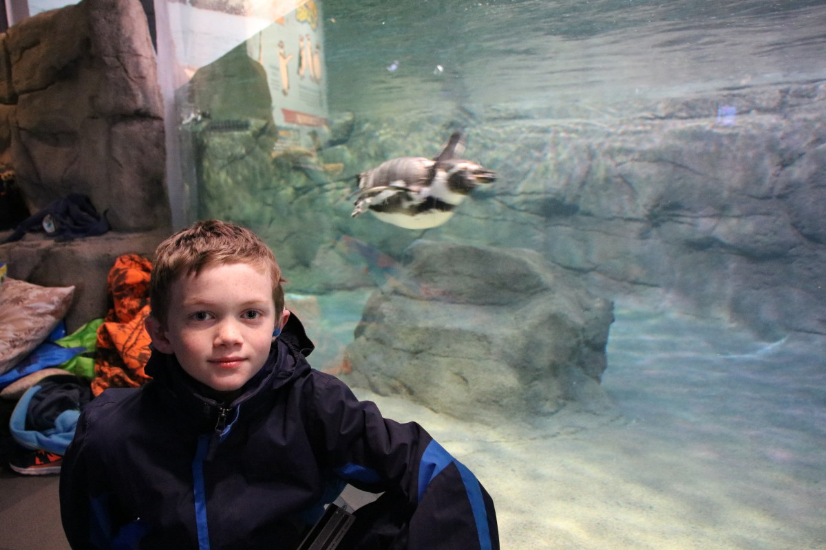 """The new """"penguin coast"""" exhibit offers a beautiful display of the birds at the aquarium."""