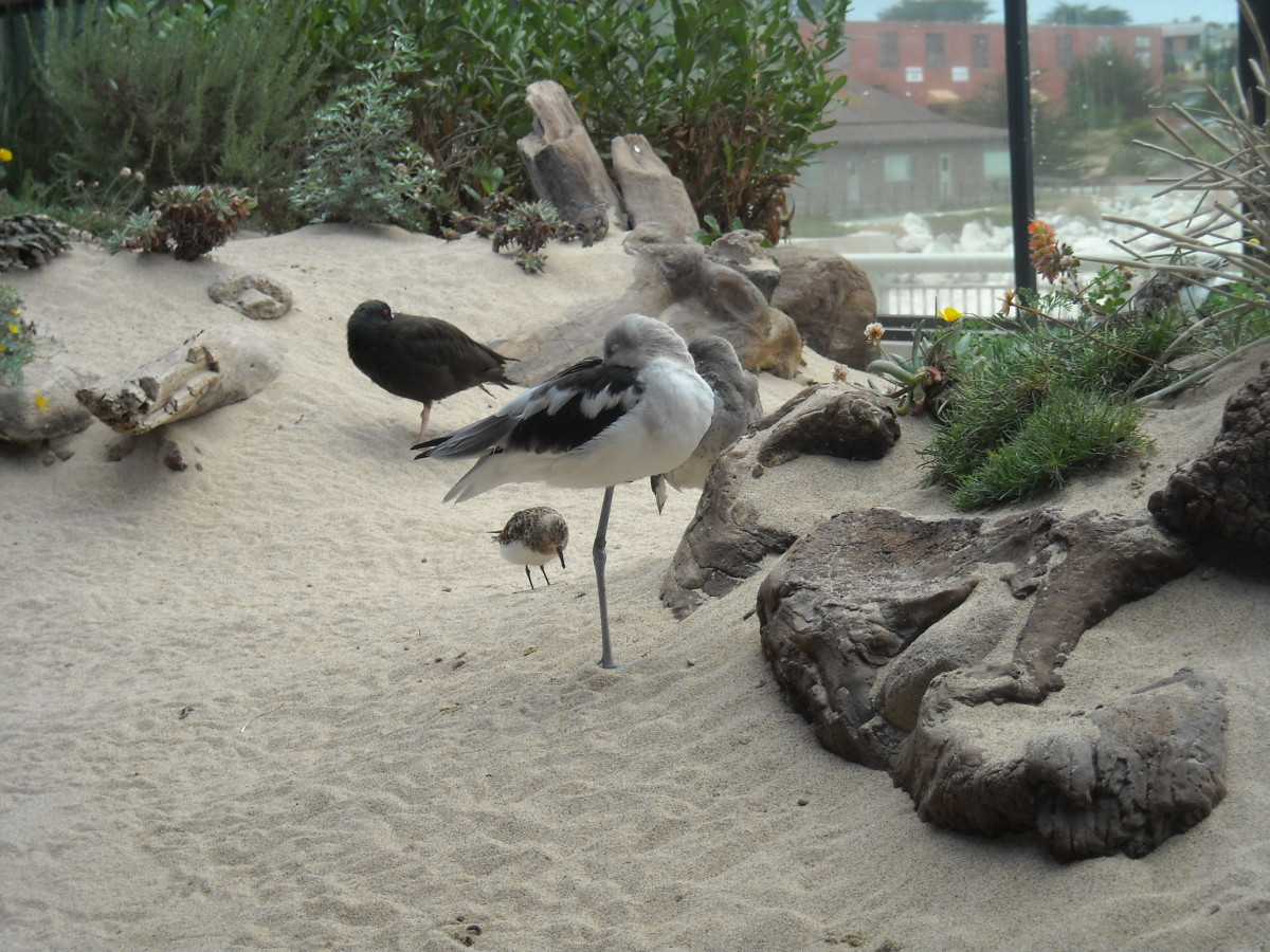 The aquarium also has shore birds and sea otters.