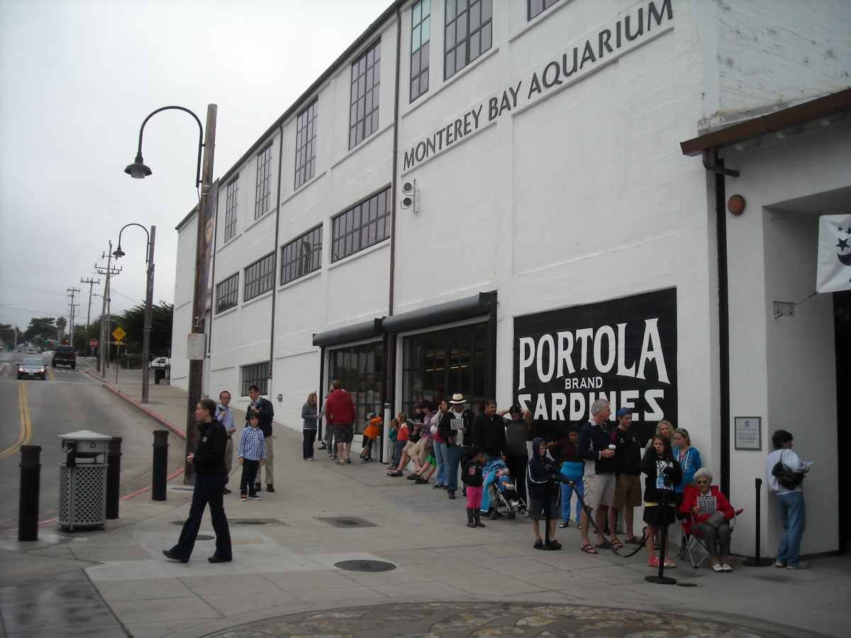 Lines outside the aquarium start forming before opening time, especially on summer weekends.
