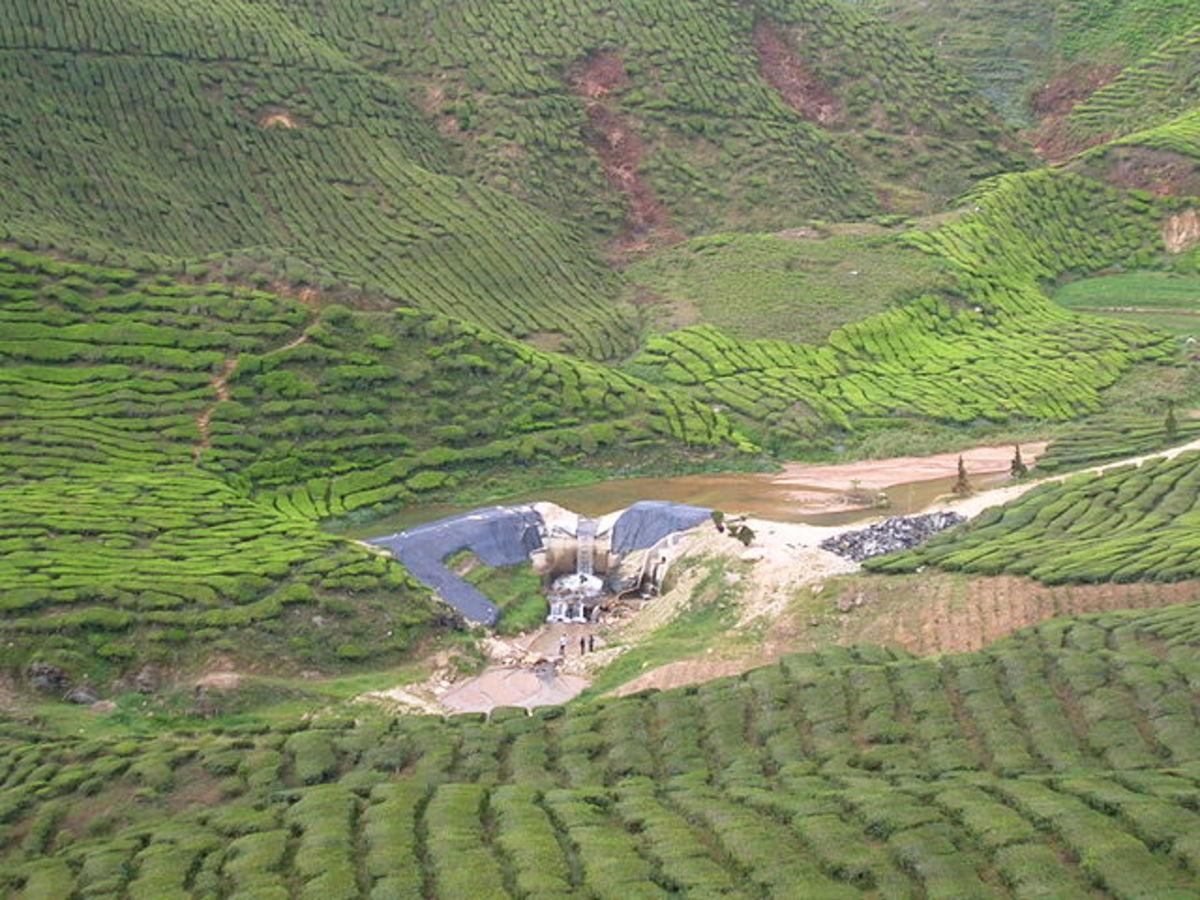 Tea plantations on Cameron Highlands