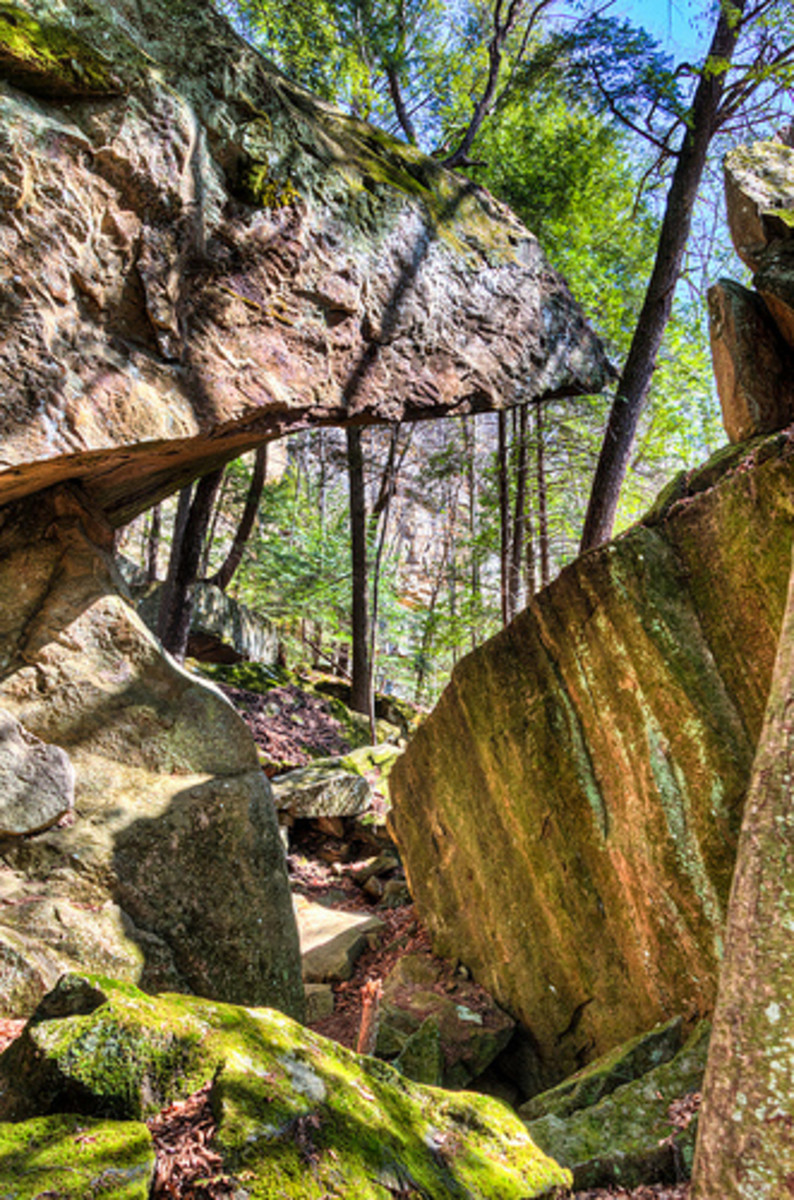 William B. Bankhead National Forest