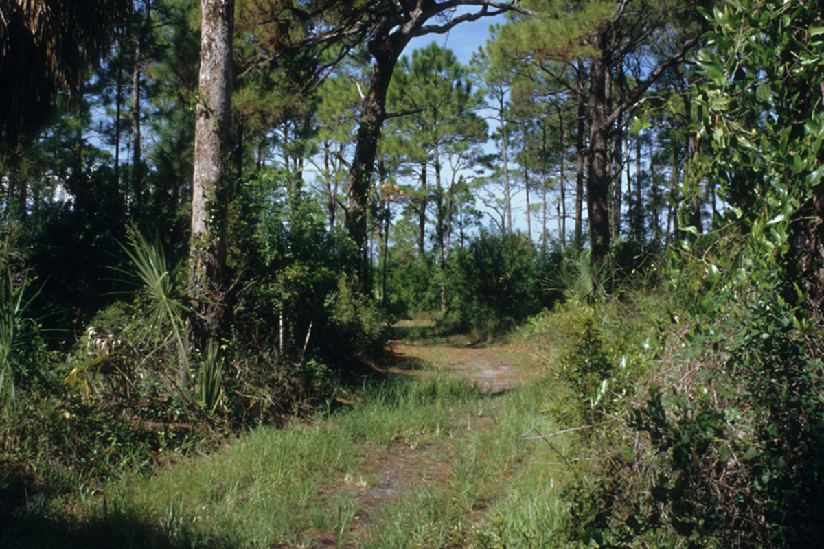 A dry woodland path on Honemoon Island, a place of tranquility on the Gulf Coast less than 20 miles from the two cities of Tampa and St Petersburg