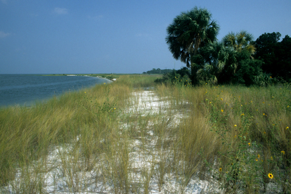 Cedar Key in Levy County. Beaches -  both those left wild as well as those cleared for human recreation - are great places to see Floridian wildlife