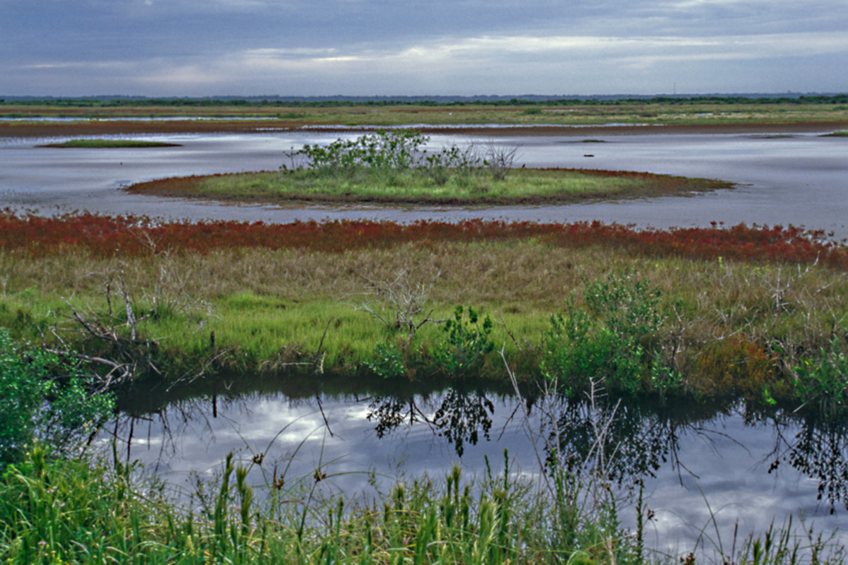 Merritt Island on the Atlantic coast. This saltwater, marsh and scrub wildlife refuge lies just 5 miles across the bay from Cape Canaveral, home of the space centre