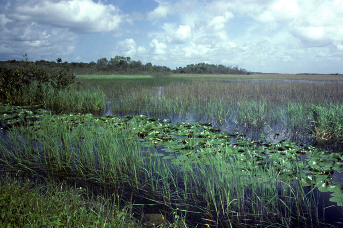 The wetlands of the Everglades National Park form the largest expanse of wilderness in Florida, a national treasure, and a true wildlife haven