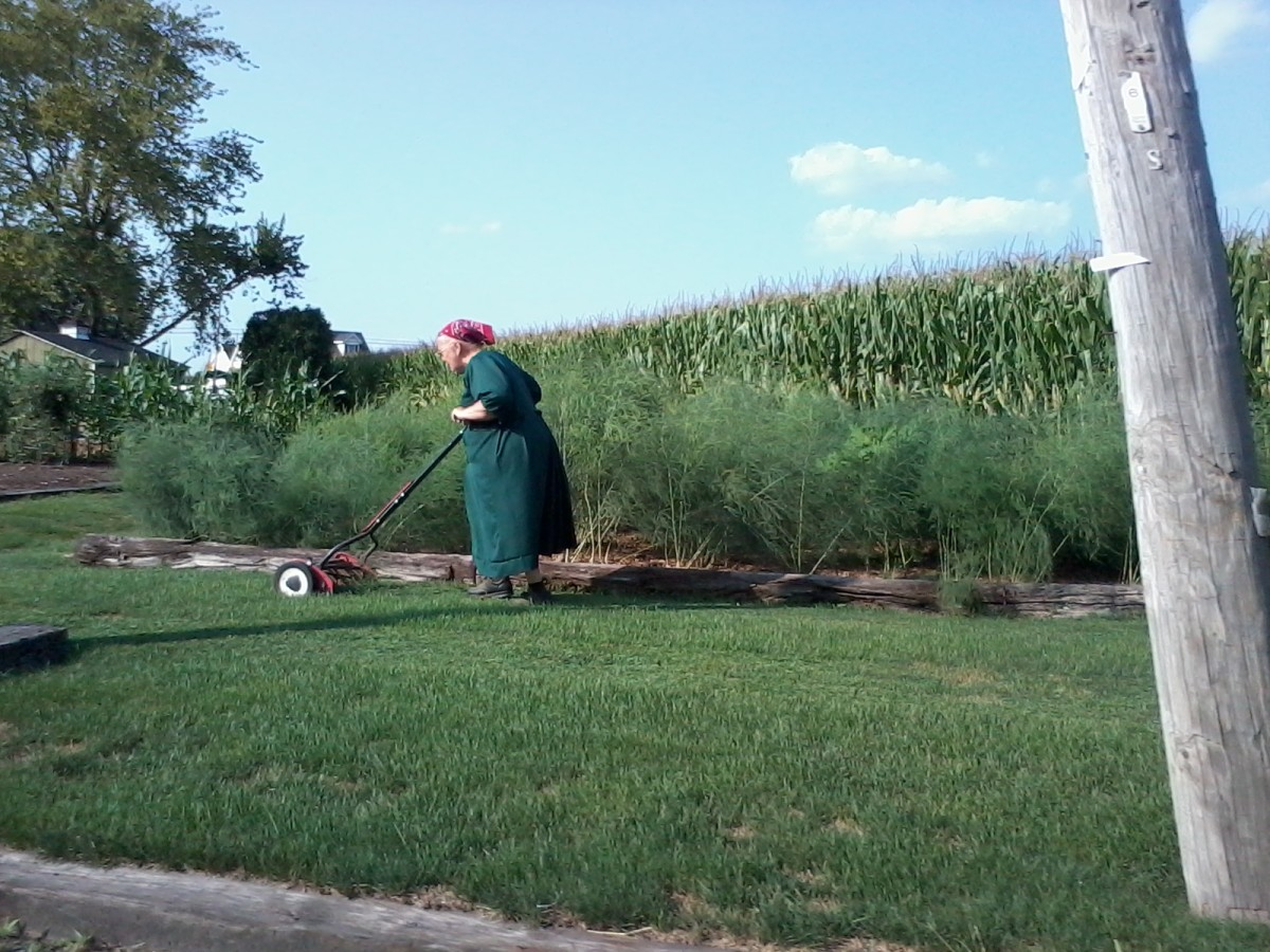 I love real mowers! And I've always admired the work ethic of the Amish.