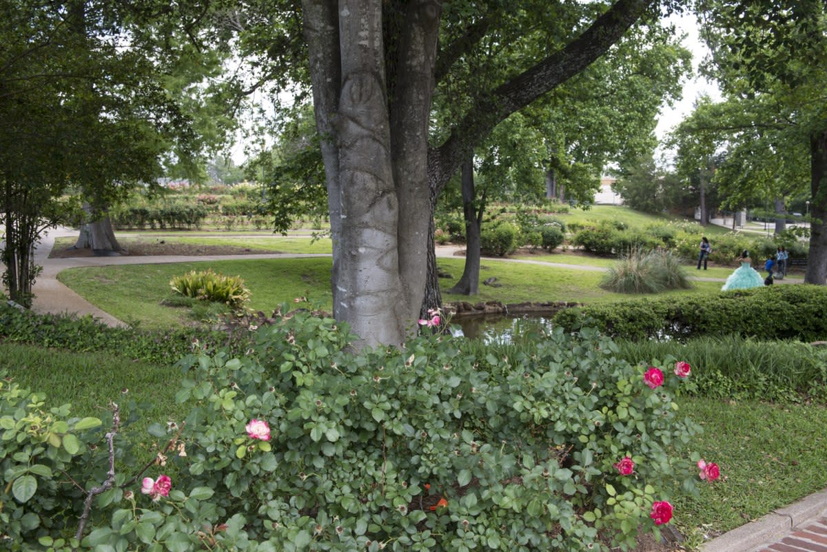 Municipal Rose Garden in Tyler, Texas