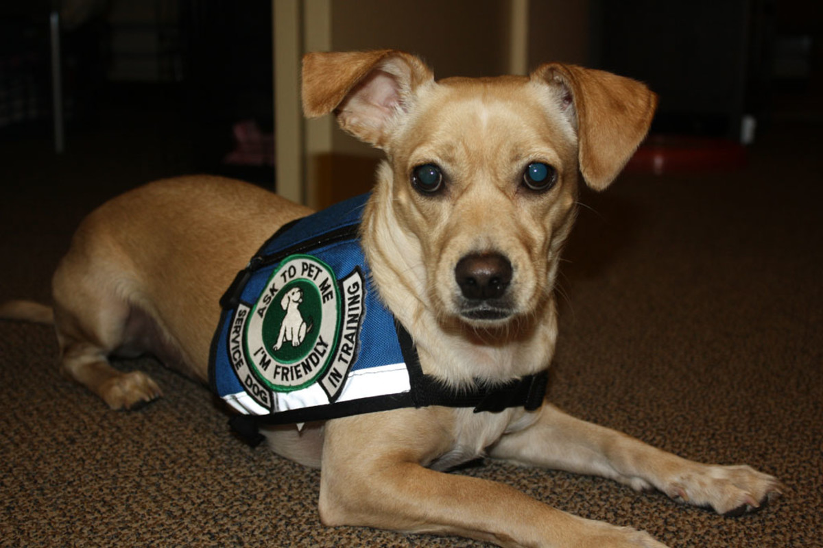 Service dogs require extensive training.