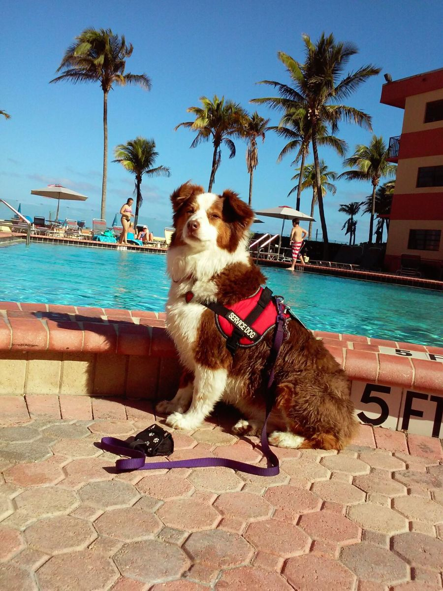 tips-for-flying-in-the-us-with-a-service-dog