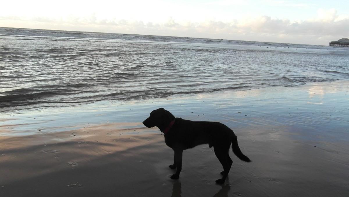 Bruno on Blackpool beach