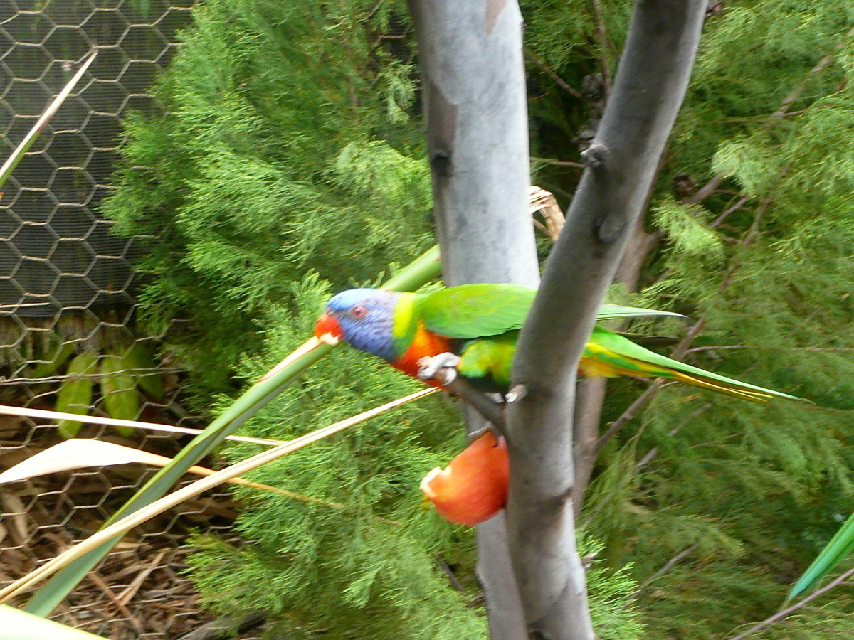 A talkative parrot