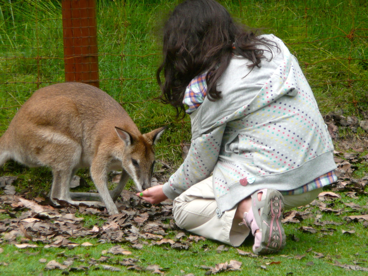 My daughter makes friends with a young kangaroo