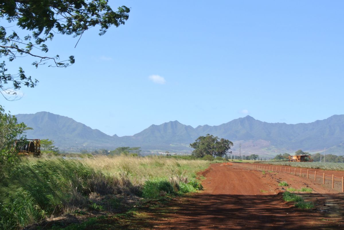 Lovely views of the surrounding countryside near the North Shore of Oahu