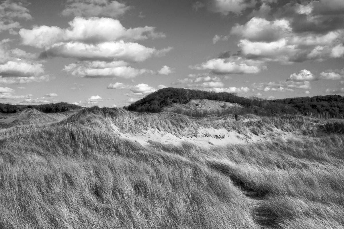 Windswept dunes of Saugatuck Harbor Natural Area