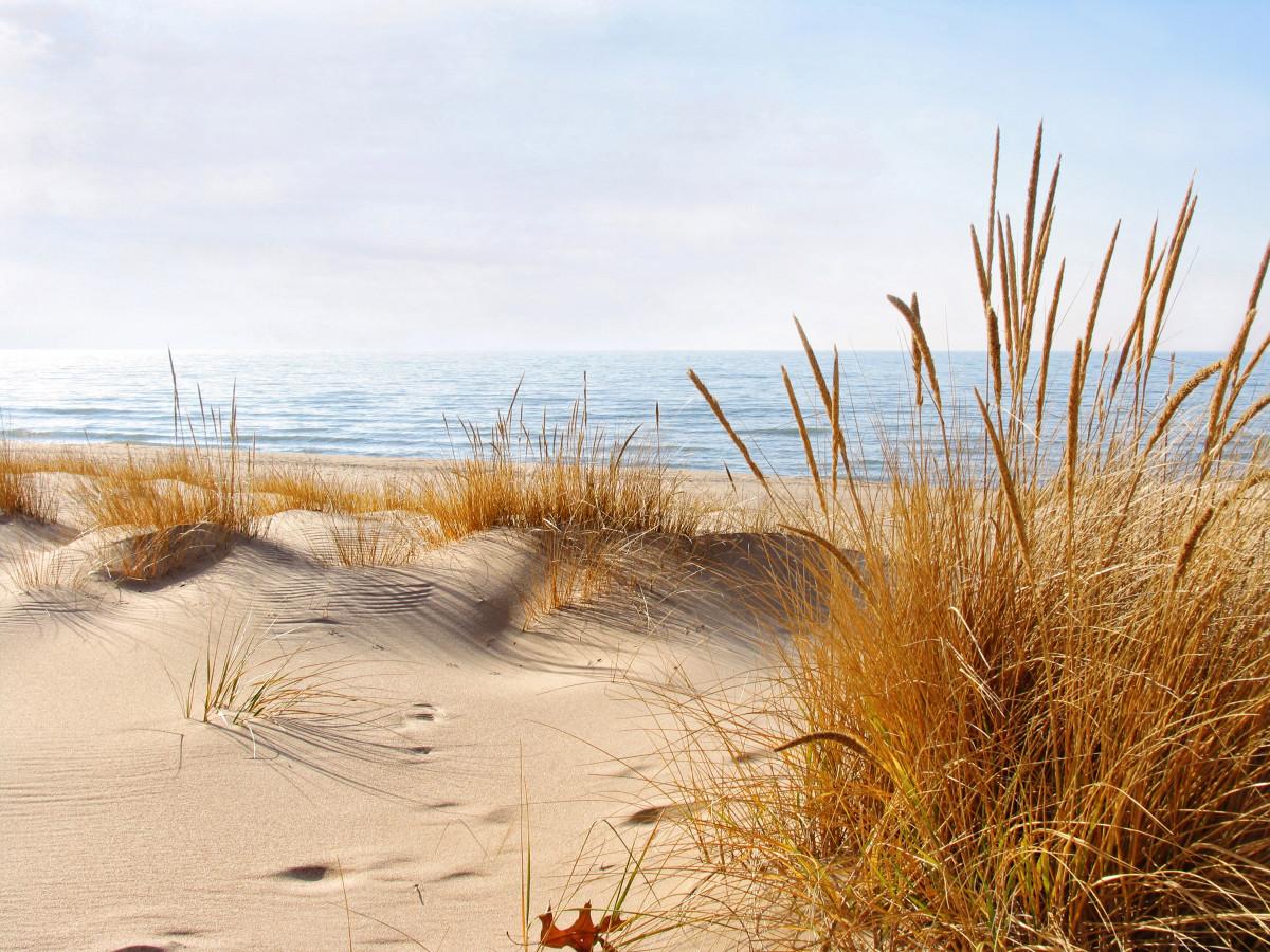 Oval Beach Golden Beach Grass of Winter (January 2012)  An Unusually Mild Winter