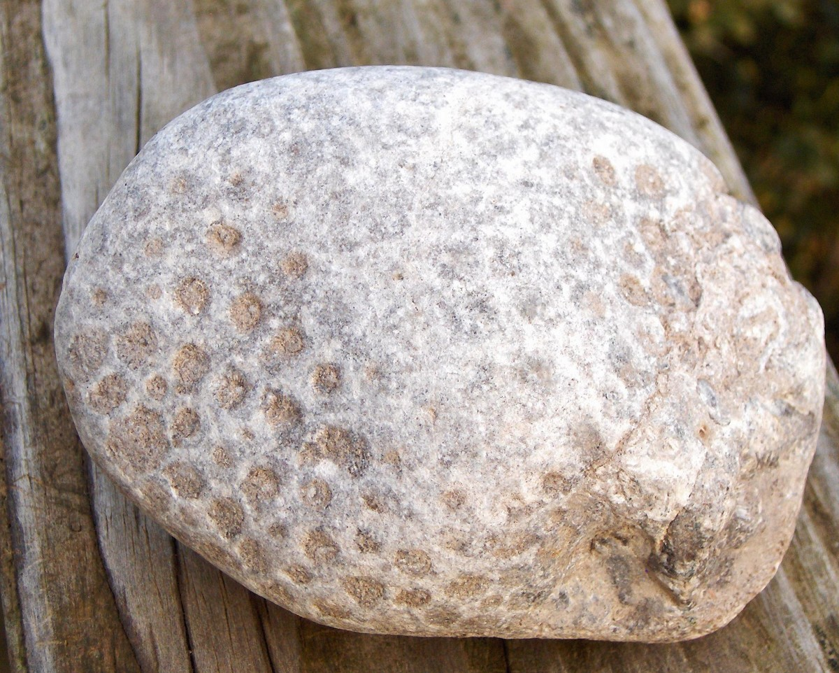 A great example of Petosky stone, a type of hexagonal fossil coral.
