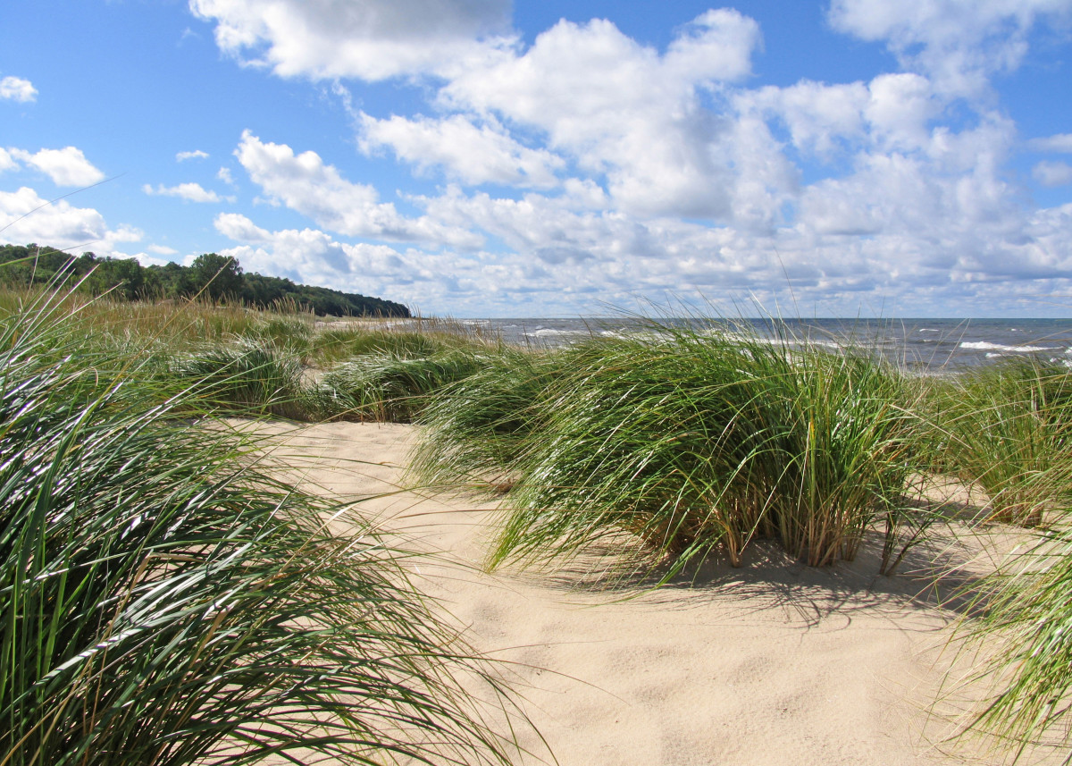Marram Grass Grown Out In Fall