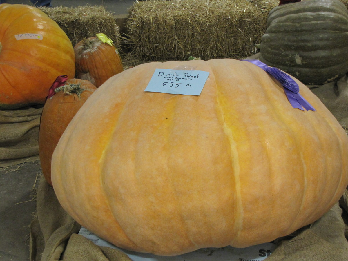 That's one big pumpkin