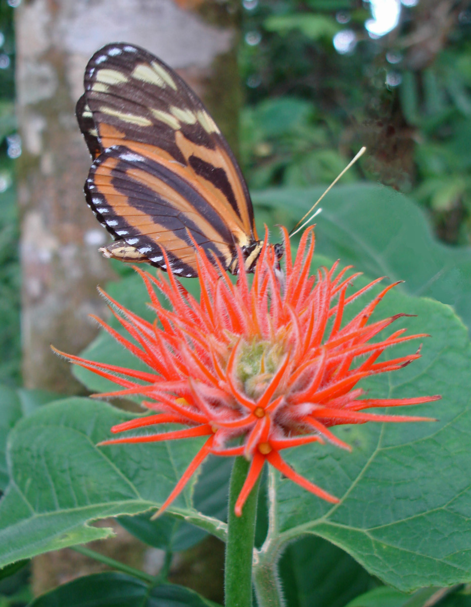 An uknown flower and an uknown butterfly visitor.  Taken near Blue River Resort.