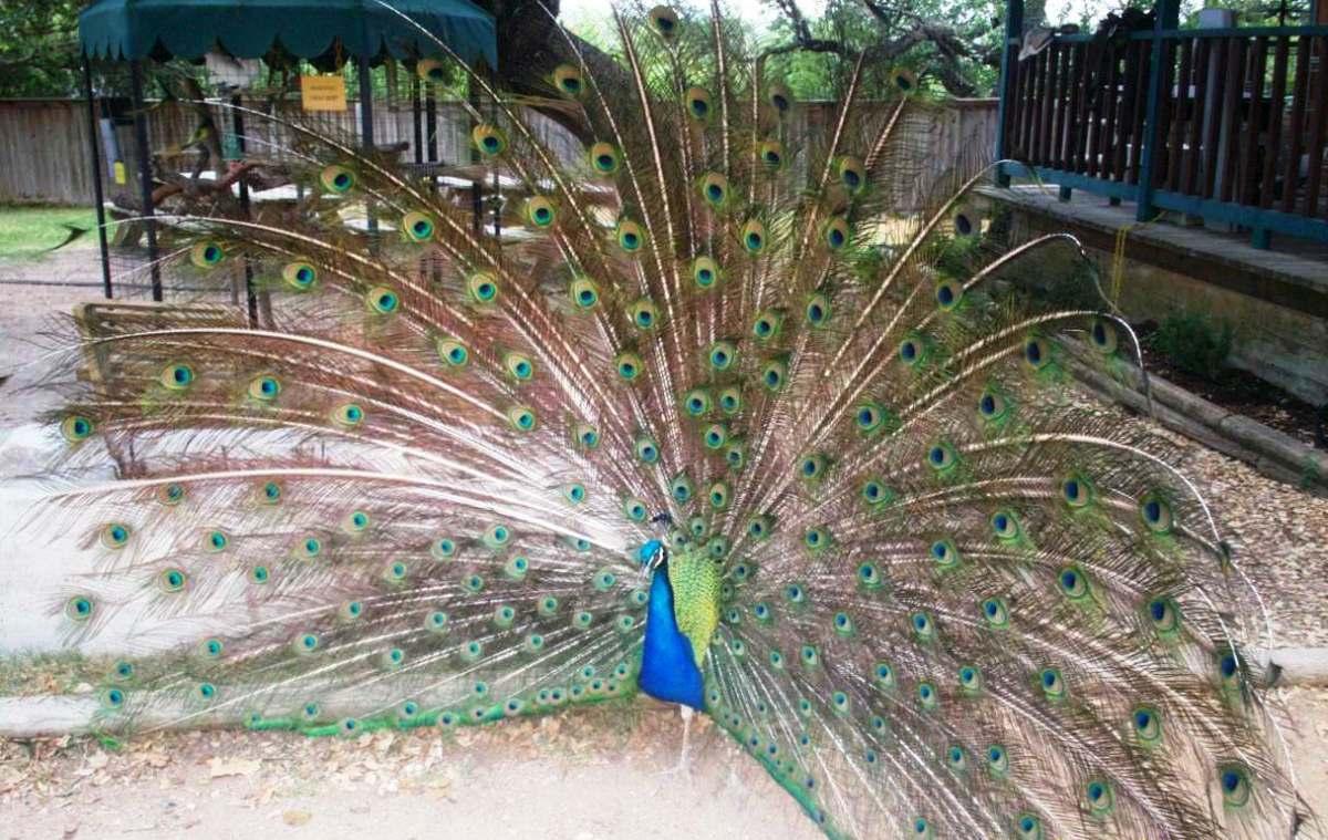 Austin Zoo, 10808 Rawhide Trail, Austin, TX 78736