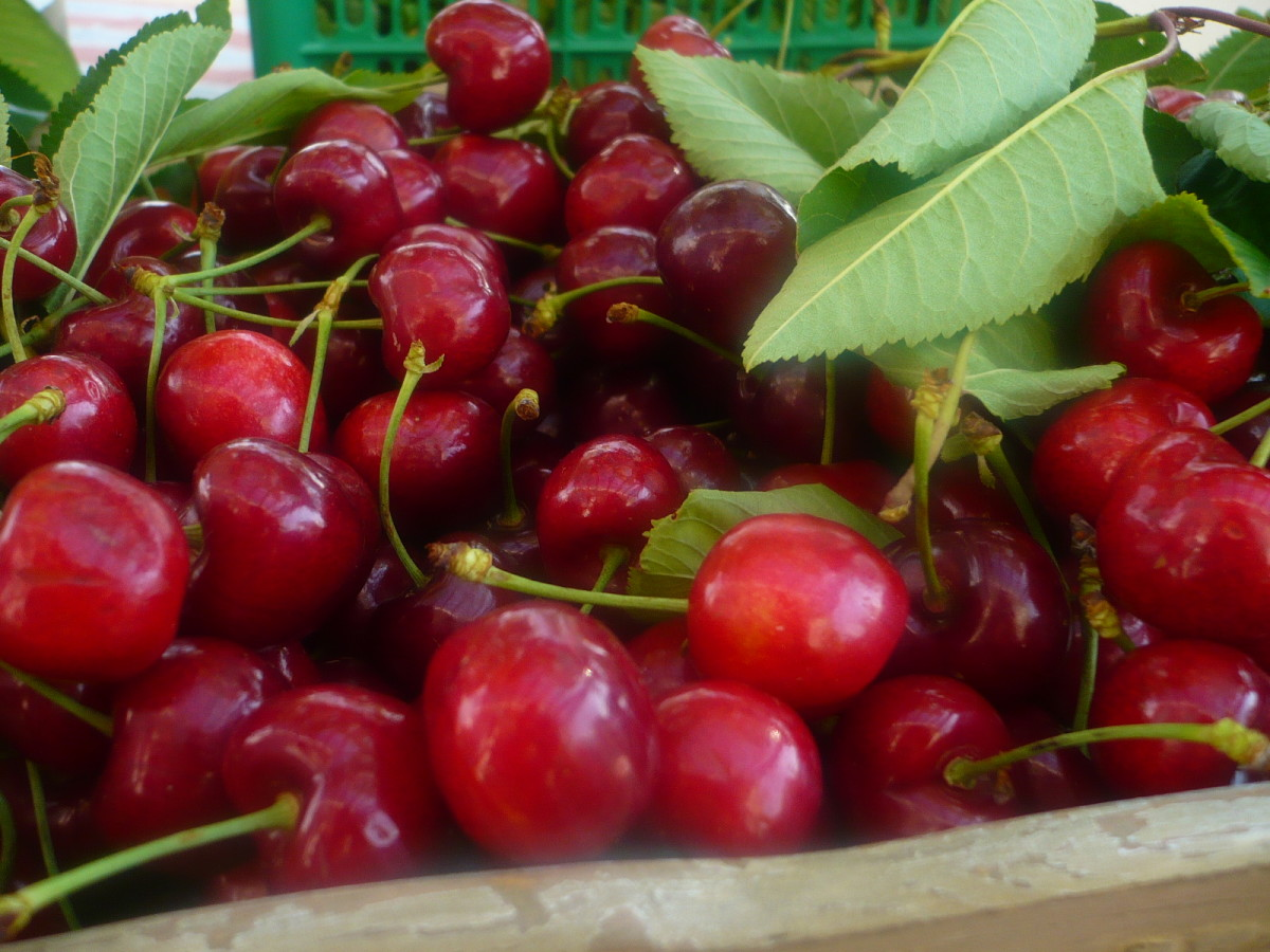 Cherries are popular fruit trees to grow as our figs, oranges, lemons and apples to name a few.
