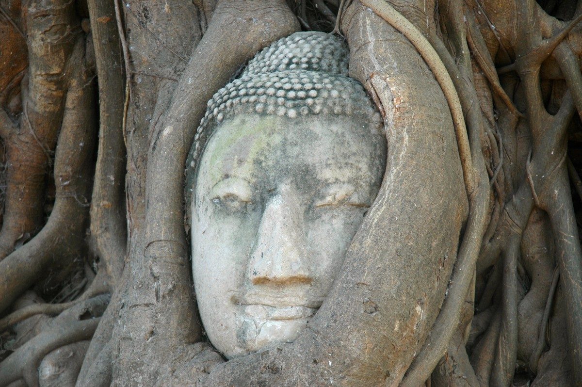 Ayutthaya's famous Buddha in a Tree