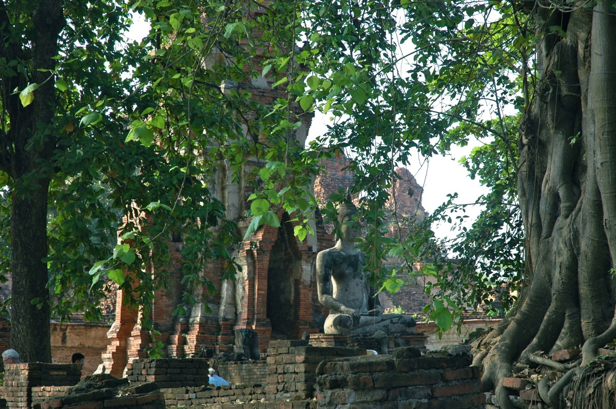 The overgrown ruins of Ayutthaya