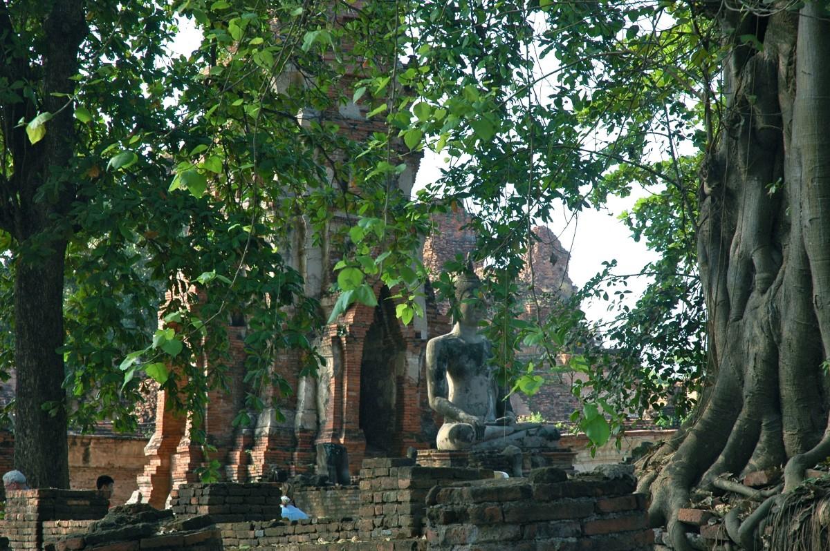The overgrown ruins of Ayutthaya