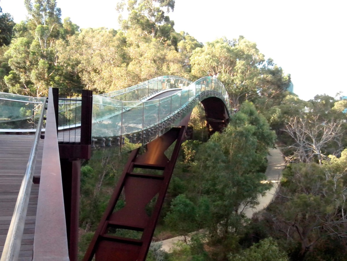 Tree Top Walk in Kings Park.