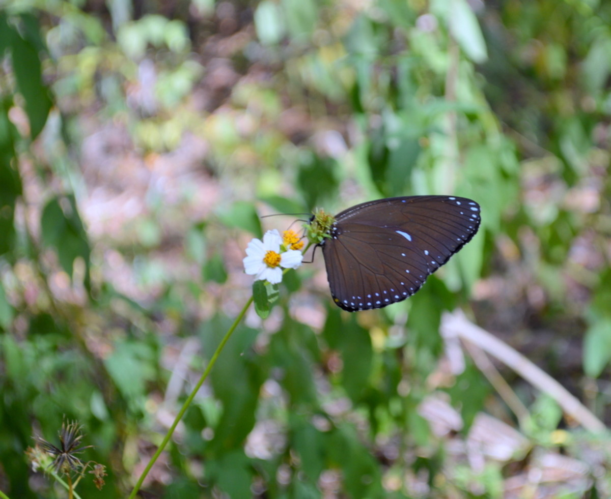 There are beautiful flowers and butterflies in Guam, too.