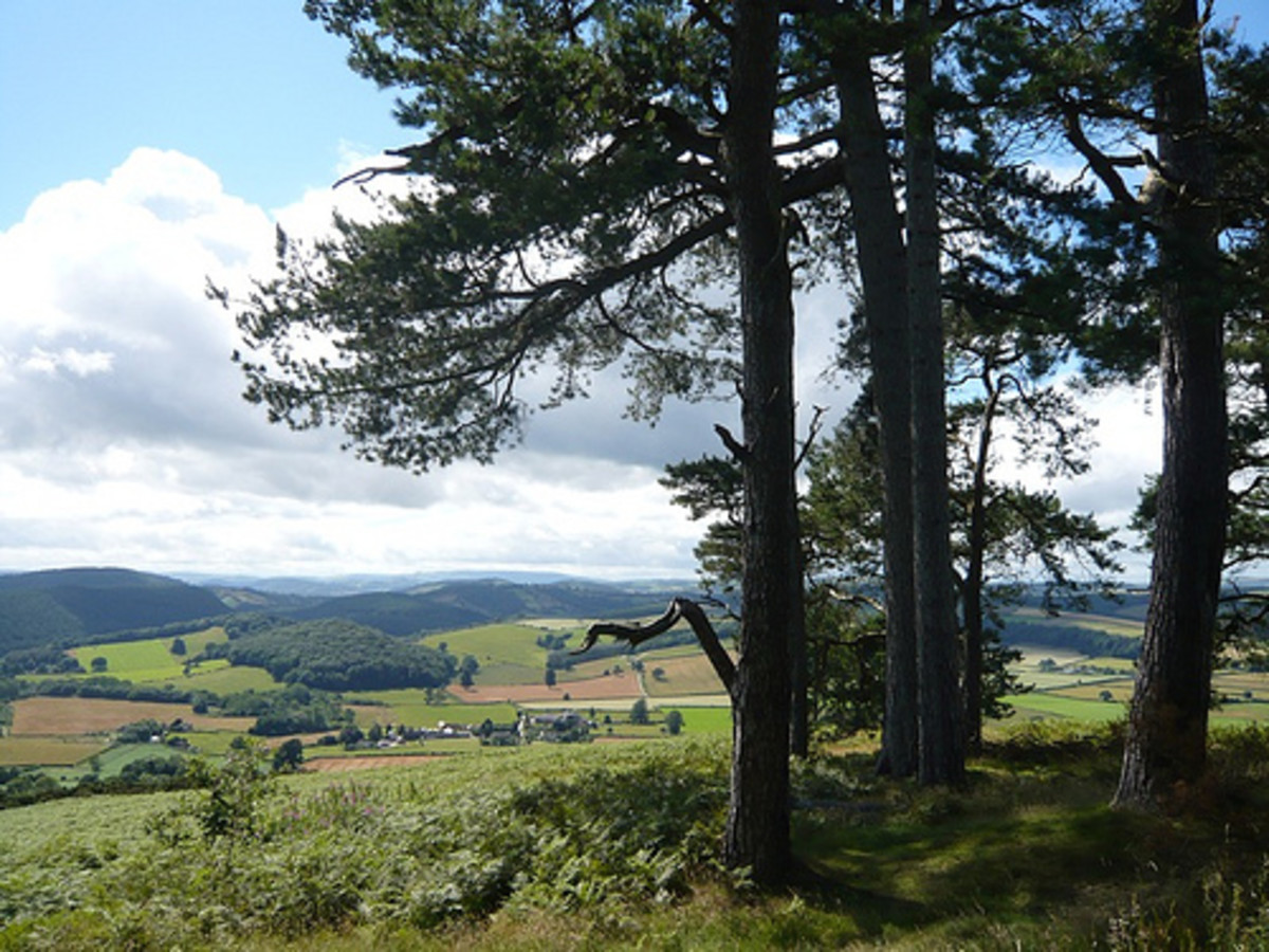 One of the most well known walks in Herefordshire is the Mortimer Trail which is a 30 mile footpath between Kington, in Herefordshire, to Ludlow, which is just over the  border in Shropshire.