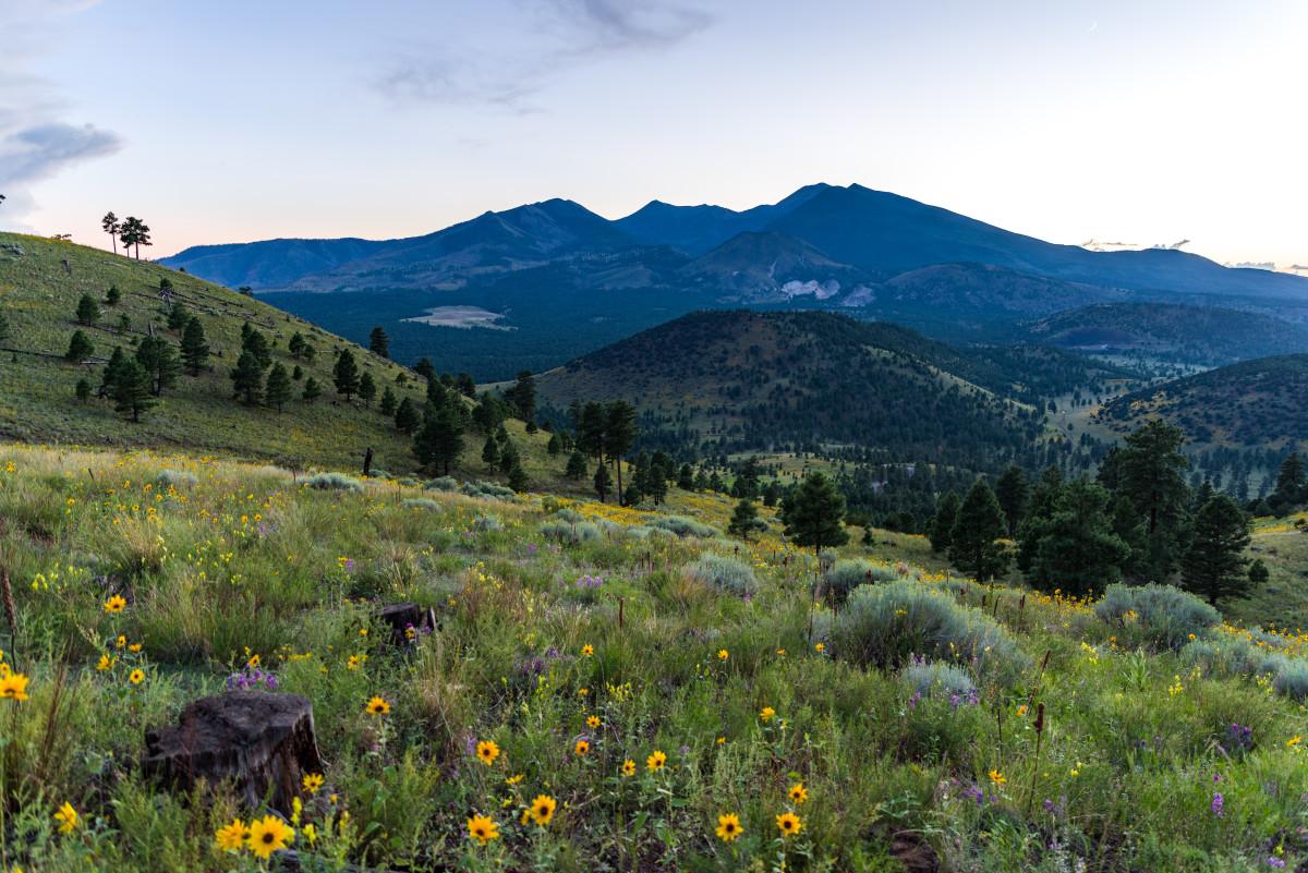 Summer Wildflowers East of the Peaks. Monsoon season brings a burst of wildflower blooms to Arizona's higher elevations around Flagstaff.