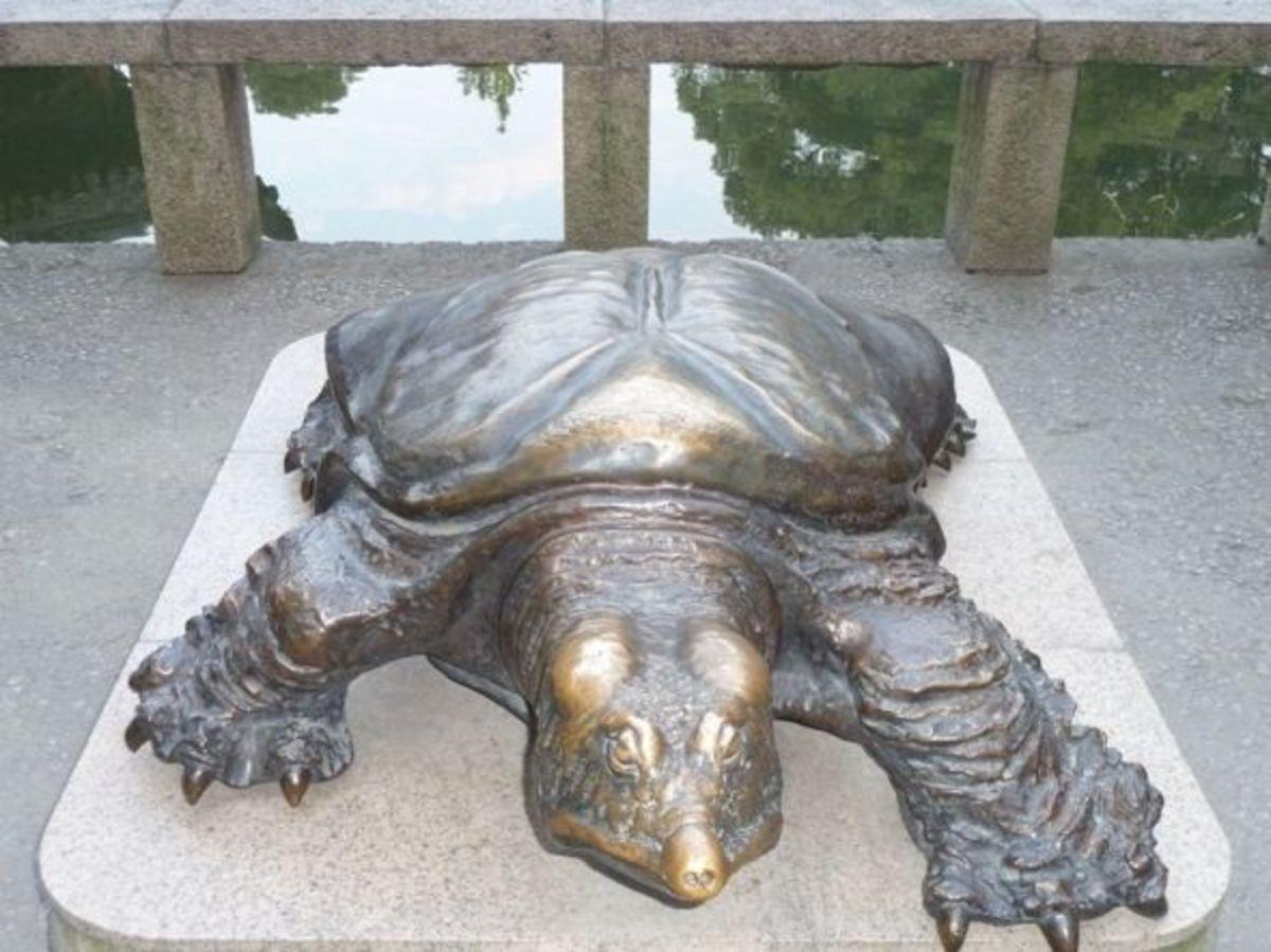 suzhou china turtle