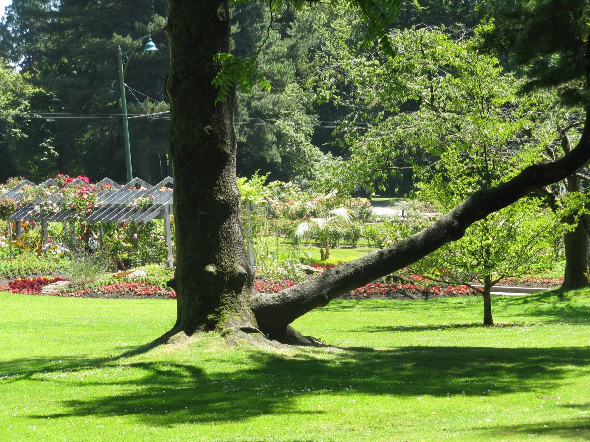 A view of the Stanley Park rose garden