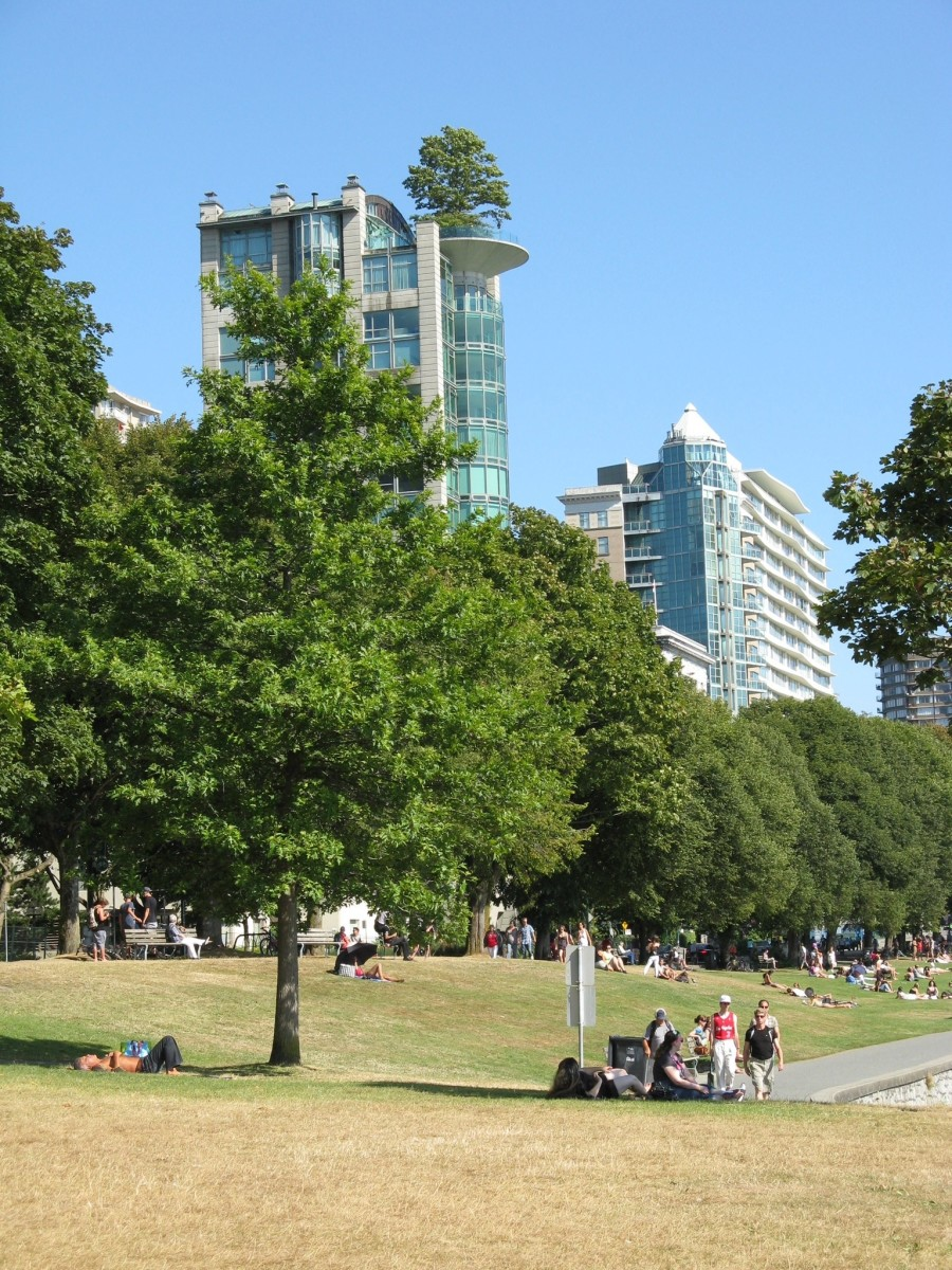 The grass beside English Bay Beach and a tree growing on top of an apartment block