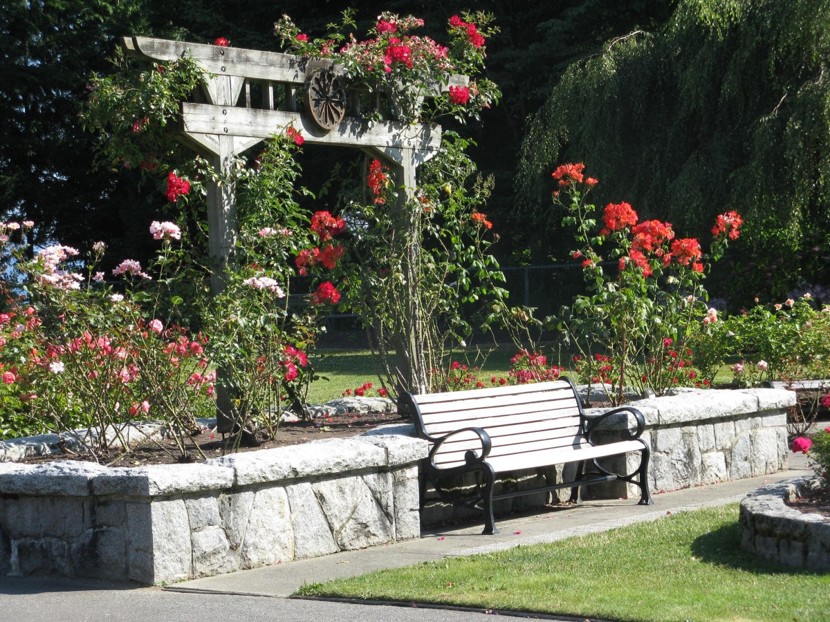 The Burnaby Mountain Park rose garden