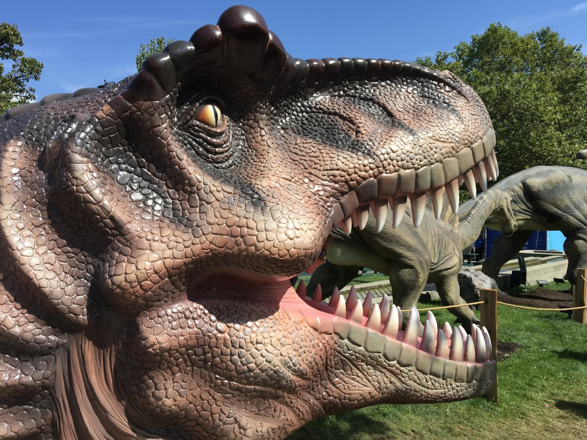 A T. rex head that children can climb into  (from the back) and have their photo taken while they are surrounded by the animal's teeth