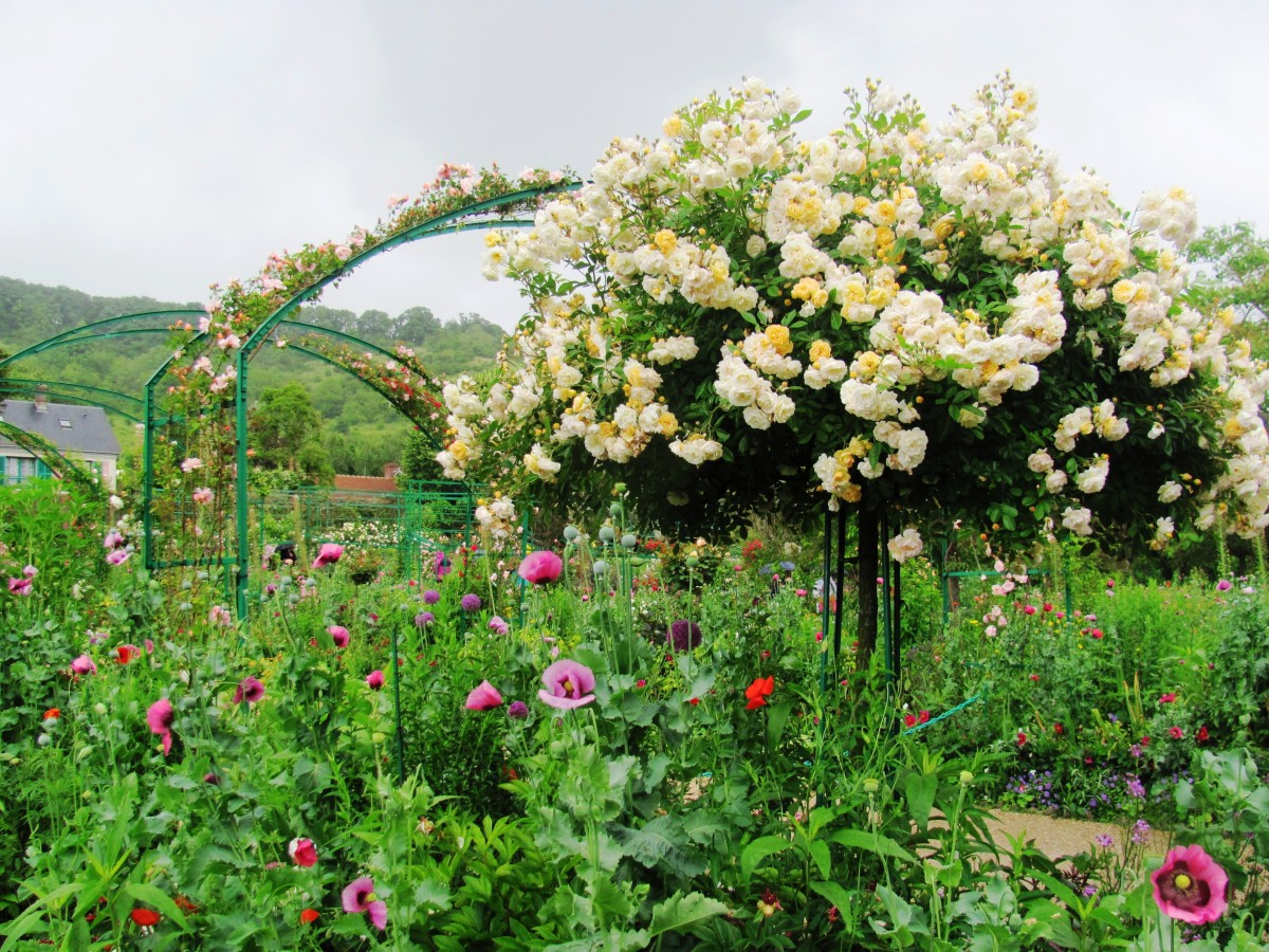 Roses climb trellises and other structures throughout the garden.