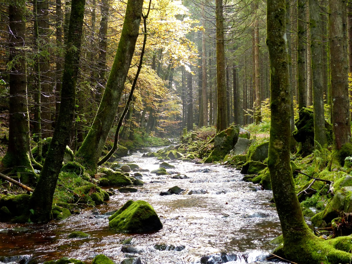 Stream in the Black Forest, Germany.