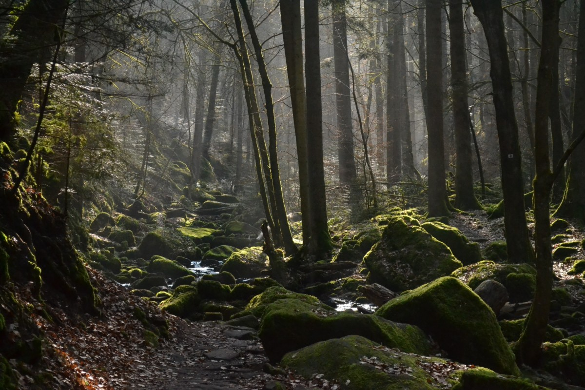 Captivating light in Germany's Black Forest.