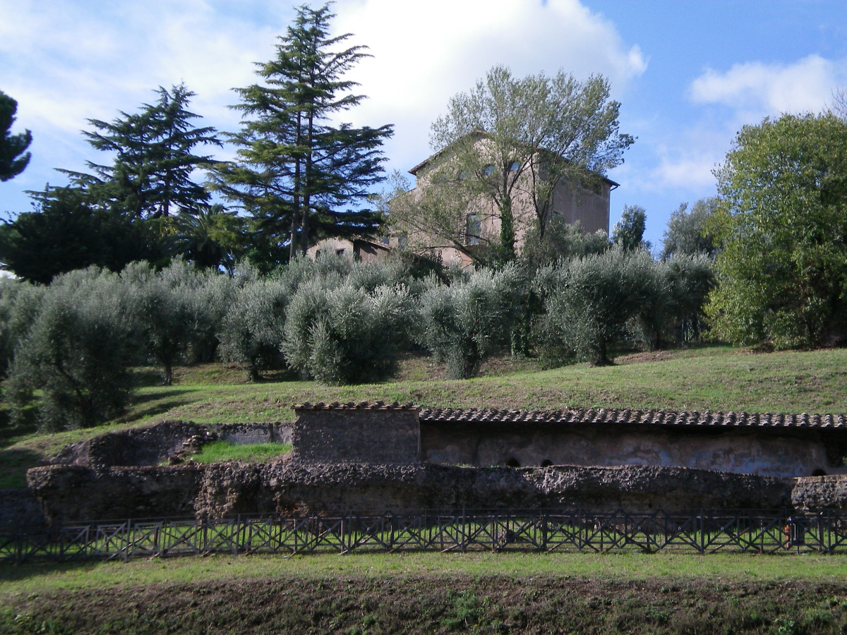 An olive grove in the heart of Rome (c) Anne Harrison