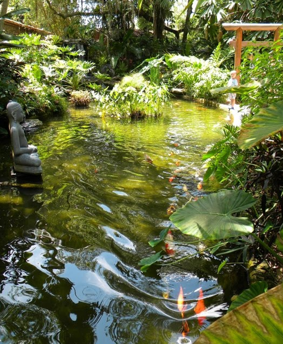 discover-florida-5-a-day-at-the-marie-selby-botanical-garden
