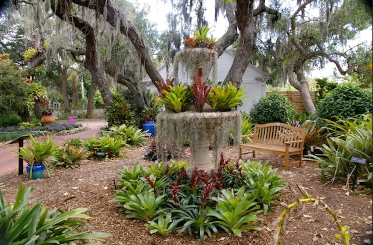 The Bromeliad Garden