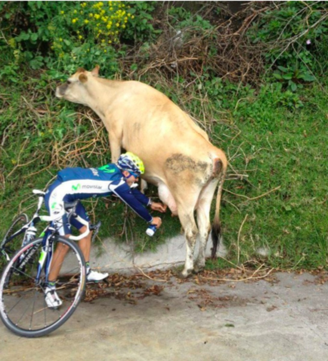 Thirsty? Milk a roadside cow!