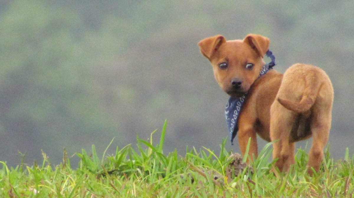 Our adopted Costa Rica street dog, Poco